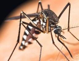 Zaštitite se: Tigrasti komarci uočeni na goričkom području