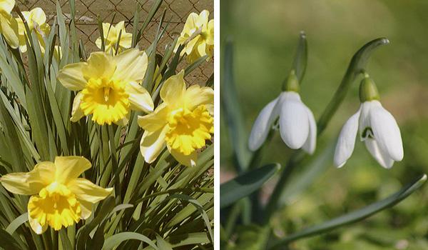 Spring (primavara) Proljetnice2arhiv